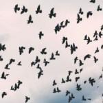20180323_Curs-migracions